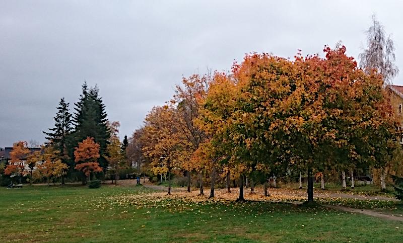 Trær med høstfarger. Foto: Av en annen verden © 2018